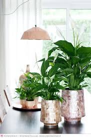 637 best indoor plants images on pinterest plants indoor plants