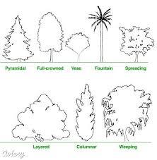 selecting the right tree treemendous