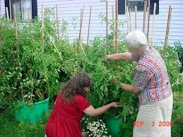 Container Vegetable Gardening Ideas Vegetable Container Garden The Secret To Container Vegetable