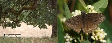 native oregon plants native plants for butterfly gardening benton soil u0026 water