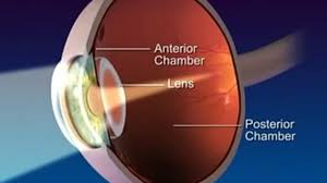 anatomy and function of the eye video dailymotion