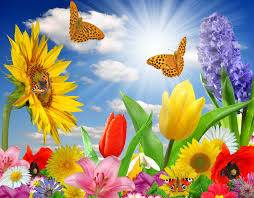 flowers spring summer rays butterfly sunlight color super nature