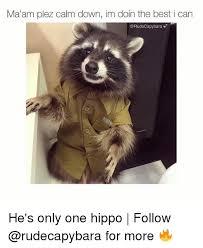 Evil Raccoon Meme - luxury evil raccoon meme ✠25 best memes about hippoe meme and