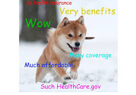 What Is Doge Meme - hhs borrows doge meme to sell obamacare and elicits a few groans