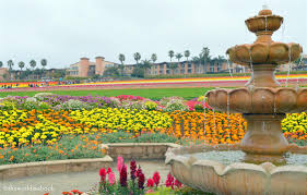 carlsbad flower garden colors of the carlsbad flower fields the world is a book