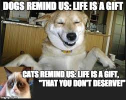 Dog Cat Meme - cats vs dogs imgflip