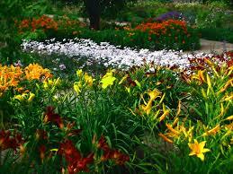 most top 16 perennial garden plans ideas dugas landscape