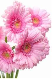 wholesale fresh flowers alders wholesale florist fresh cut flowers wholesale flowers