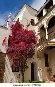 spain andalusia cordoba patio of a hotel in the old city stock