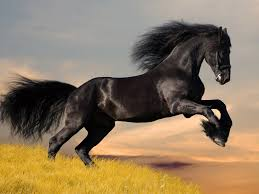 hairstyles for horses black horse wallpapers homecoming hairstyles