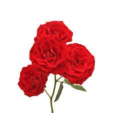 bulk roses spray bulk roses