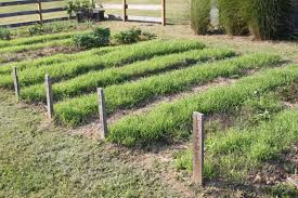 garden cover crop no till winter cover crops 17 best images about