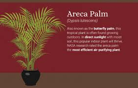 best plants for air quality office plants keep bad air out of your lungs while you breathe all