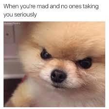 Puppy Face Meme - inspirational 28 puppy face meme wallpaper site wallpaper site