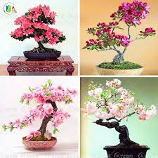 best 25 ornamental plants ideas on purple pas