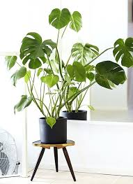 best low light house plants living room 15 best low light houseplants to grow indoor low