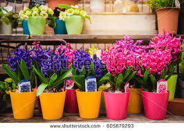 Delivery Flower Service - flower delivery stock images royalty free images u0026 vectors
