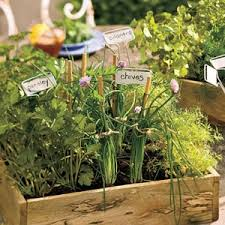 small space gardening ideas allyou com