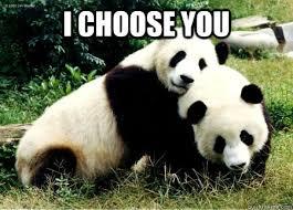 Funny Panda Memes - i choose you panda love quickmeme