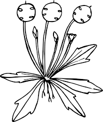 how to draw a wildflowers 24 free printable flowers stencils