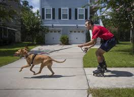 Former SC Stingray player takes dog walking to another level as the
