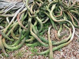 planters common name medusa head stone planter medusa head