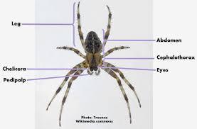 roots u0027n u0027 shoots spiders biological control garden critter of