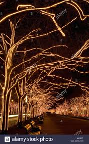trees with strands of lights stock photo royalty free