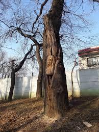 amazing sculptures romanian artist turn tree stumps into amazing sculptures 7