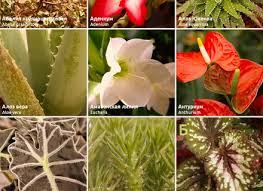 flower power garden dunneiv org