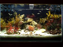 irish native plants 200l native marine irish rockpool aquarium status january 2014