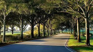 resort activities villas of grand cypress orlando fl