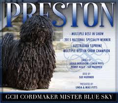australian shepherd 2015 westminster westminster kennel club herding best of breed list u2013 monday