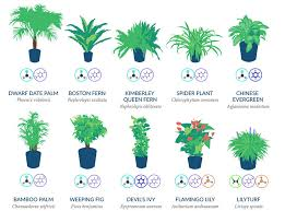 best plants for air quality nasa reveals a list of the best air cleaning plants for your home