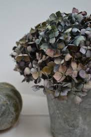 dried hydrangeas 50 best dried hydrangea arrangements images on
