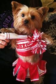 yorkie halloween costumes 90 best posh pet shop images on pinterest animals adorable