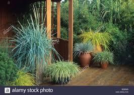 hton court fs 1995 design geoffrey whiten ornamental grasses in