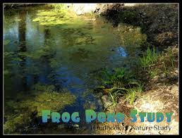 Frog Pond Backyard All Things Beautiful Nature Study Of Water Habitats Bay