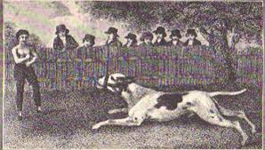 american pitbull terrier uk law dog law reporter the sordid history of pit bull fighting in 19th