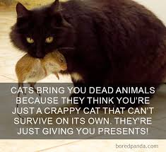 Cat Facts Meme - a dump of cat facts album on imgur