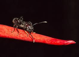 obat kuat semut ireng titan gel original herbalpembesarzakar com