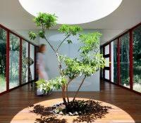 indoor trees that don t need light treehouse bed with slide diy accessories ideas how to decorate small