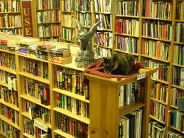 bookstore cat at ophelias books this cat knows its place i u2026 flickr