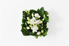 gardenia flower delivery gardenia flowers boxes for sale overnight delivery