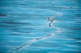 10 incredible photos of polar bears in the wild