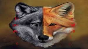 difference between fox and wolf