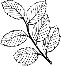 fall leaves black and white clipart 75