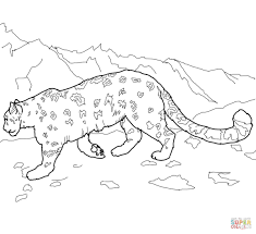 snow leopards coloring pages within leopard coloring pages eson me