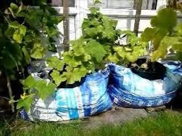 Vegetable Container Garden - 65 best garden container u0026 fairy images on pinterest fairy