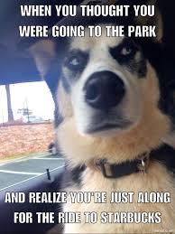 Husky Meme - doggy meme starbucks husky meme funny dogs husky memes